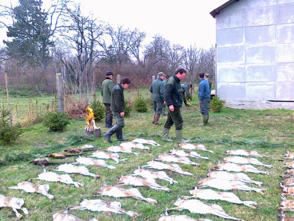 Caccia alla lepre in Ungheria